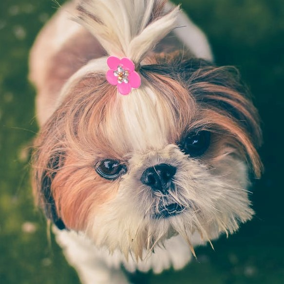 5 Dog Grooming Essentials For Every Pet Owner